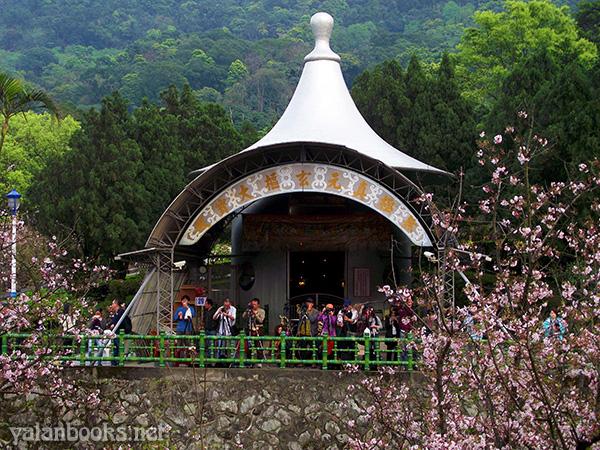 Taiwan Travel Spring Cherry Flowers Tamsui photography Romanticism 台湾旅行 淡水天元宮 山寺樱花 花卉摄影 浪漫主义 Yalan雅岚 黑摄会